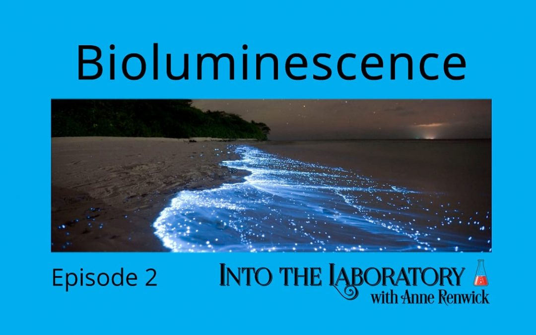 Bioluminescence